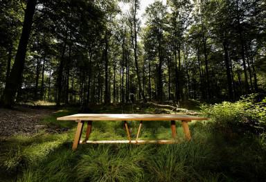 Skovbilleder