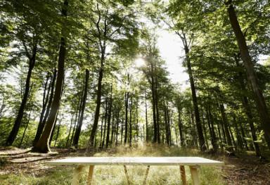 SAUNTEBORD i asketræ  - i skoven